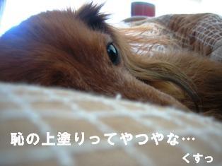 IMG_2193blog.jpg