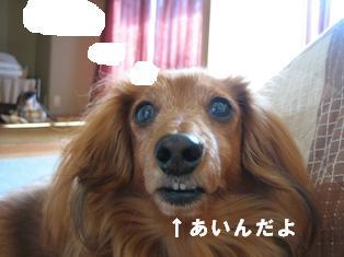 IMG_2213burogu.jpg