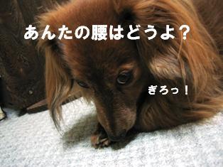 IMG_2254blog.jpg