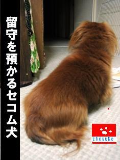 IMG_2259burogu.jpg