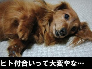 IMG_2262blog.jpg