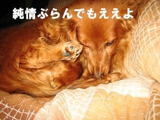 IMG_2294blog.jpg