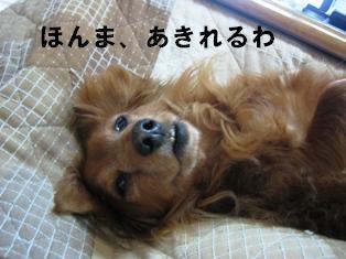 IMG_2299blog.jpg