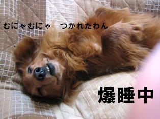 IMG_2304blog.jpg