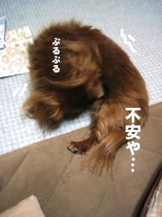 IMG_2346blog.jpg