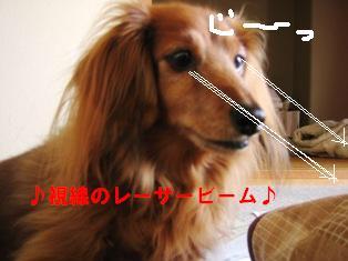 IMG_2362blog.jpg