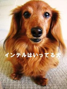 IMG_2366blog.jpg