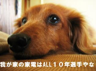 IMG_2372blog.jpg