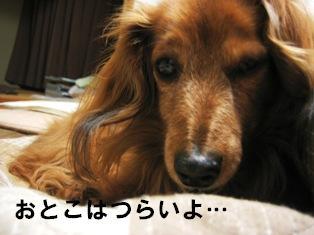 IMG_2387blog.jpg