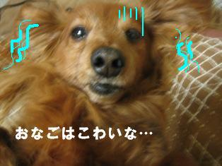IMG_2409blog.jpg