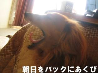 IMG_2424blog.jpg