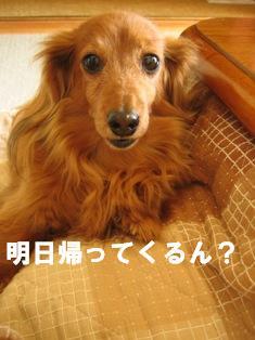 IMG_2432blog.jpg