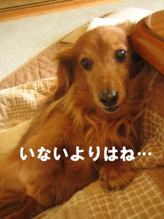 IMG_2433blog.jpg