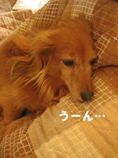 IMG_2435blog.jpg