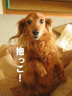IMG_2437blog.jpg