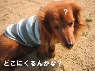 IMG_2664blog.jpg