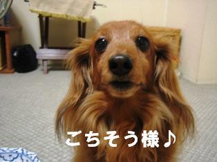 IMG_2681blog.jpg