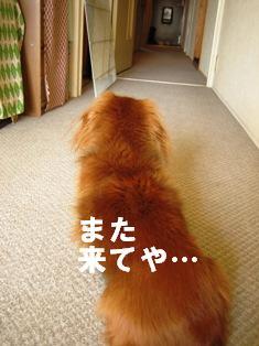 IMG_2686blog.jpg