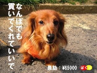 IMG_2688blog.jpg