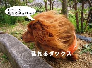 IMG_2700blog.jpg