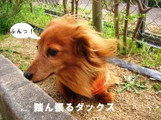 IMG_2701blog.jpg