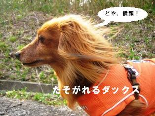 IMG_2703blog.jpg