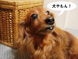 IMG_2710blog.jpg