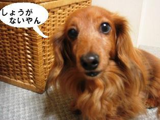 IMG_2711blog.jpg