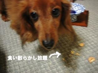 IMG_2714blog.jpg