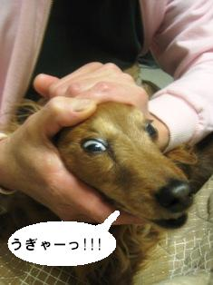 IMG_2719blog.jpg