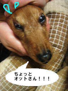 IMG_2720blog.jpg