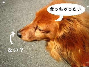 IMG_2730blog.jpg