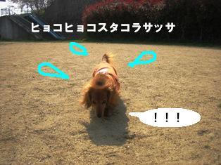 IMG_2756blog.jpg