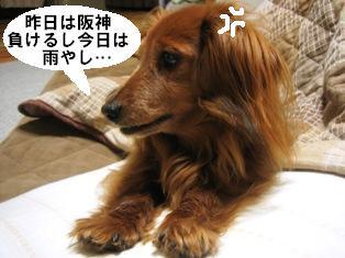 IMG_2768blog.jpg