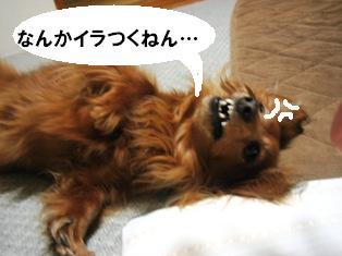 IMG_2789blog.jpg