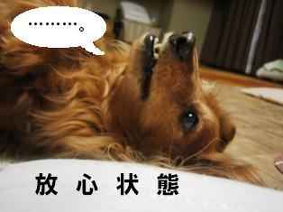 IMG_2791blog.jpg