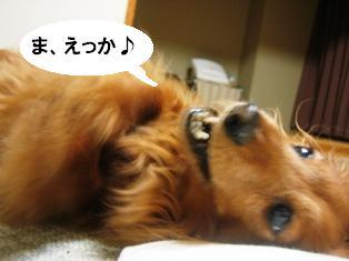 IMG_2793blog.jpg