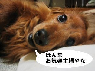 IMG_2798blog.jpg