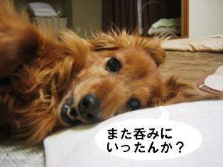 IMG_2799blog.jpg