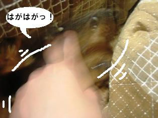 IMG_2817blog.jpg
