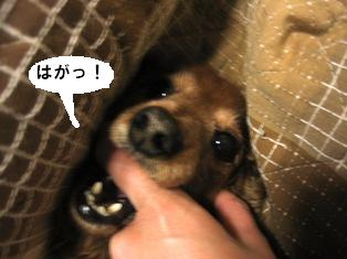 IMG_2818blog.jpg