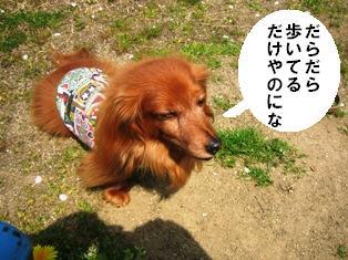IMG_2824blog.jpg