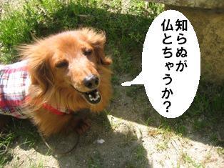 IMG_2858blog.jpg