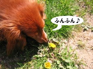 IMG_2862blog.jpg