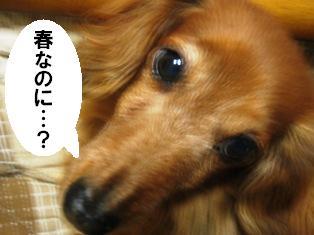 IMG_2873blog.jpg