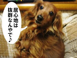 IMG_2880blog.jpg