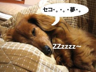 IMG_2884blog.jpg