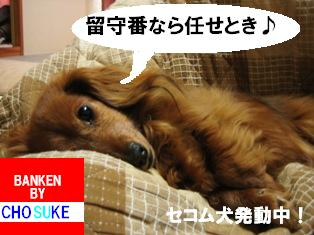 IMG_2885blog.jpg