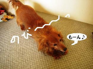 IMG_2893blog.jpg