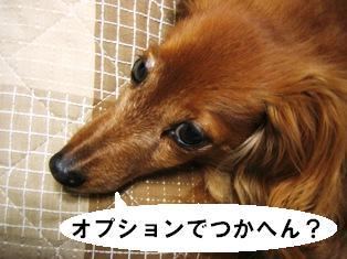 IMG_2927blog.jpg